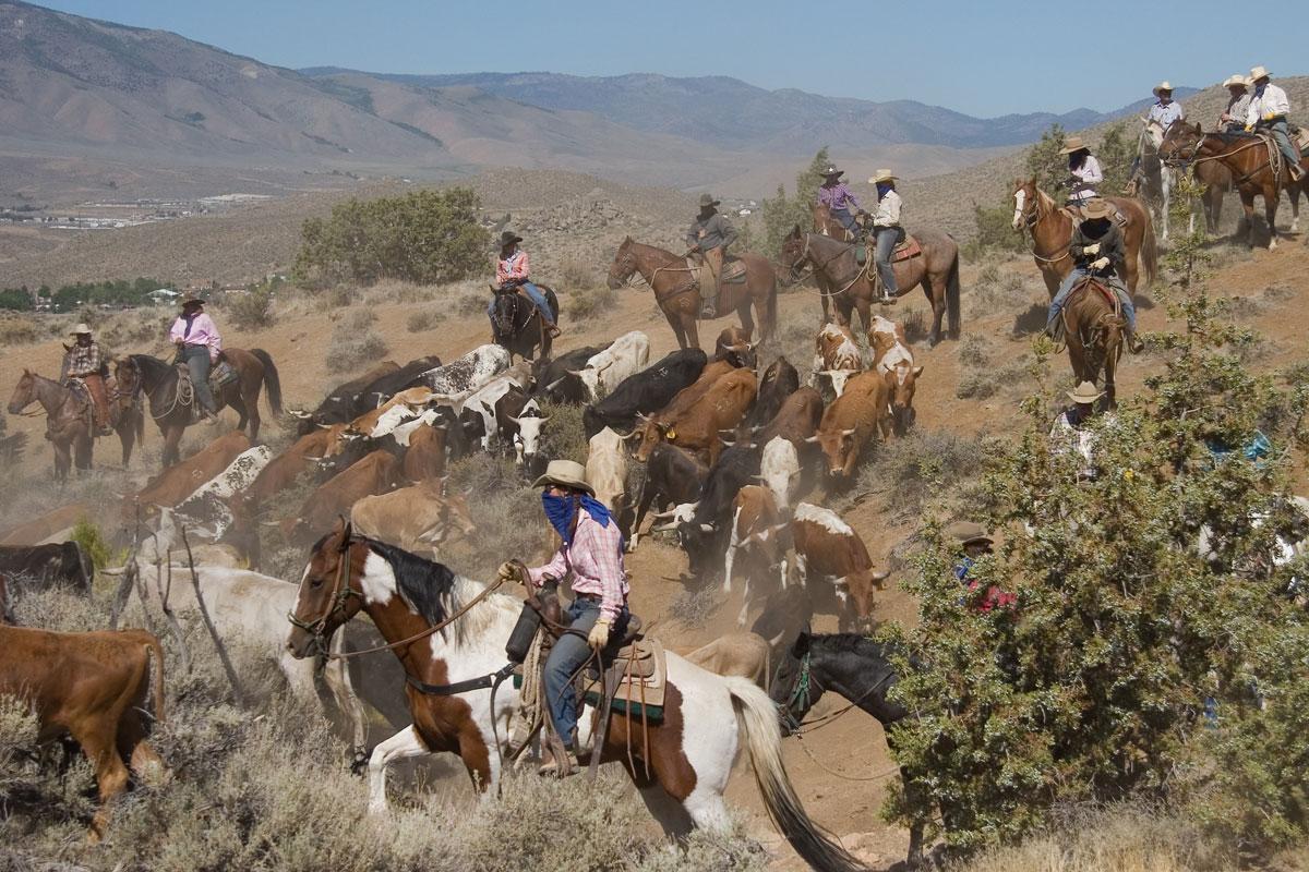 Reno Events Calendar 2020 2020 Cattle Drive
