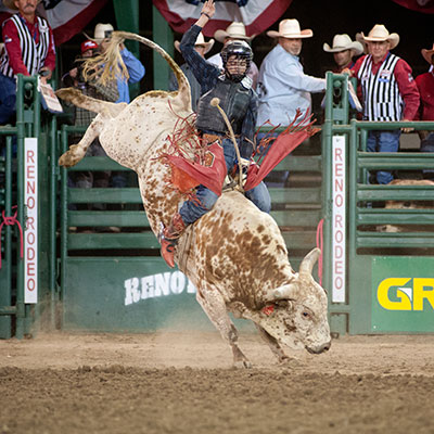 Bull Riding - Reno Rodeo