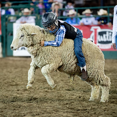 Mutton Bustin - Reno Rodeo