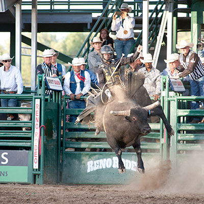 Saddle Bronc - Reno Rodeo